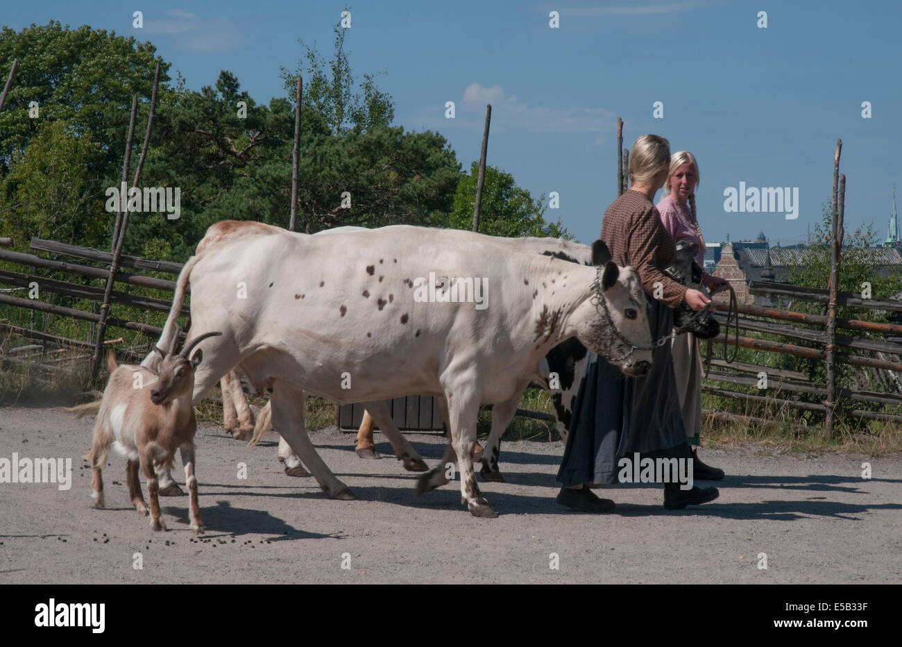 Tending the livestock at a summer pasture farm (Dalarna, N. Sweden) at Skansen open air museum, Djurgarden, Stockholm - Stock Image