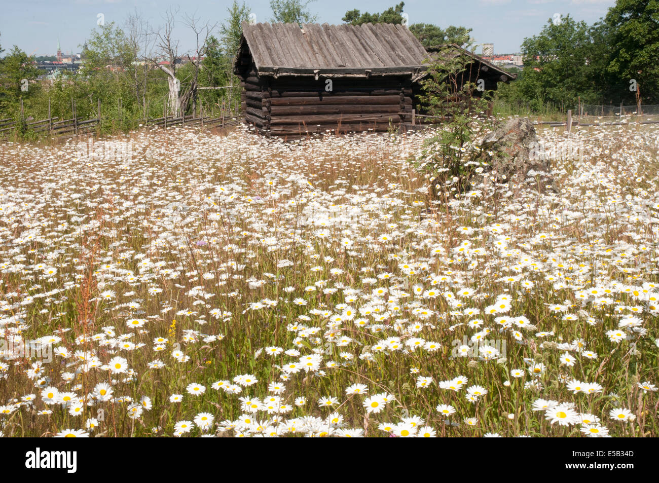 Summer pasture farm (Dalarna, N. Sweden) at Skansen open air museum, Djurgarden, Stockholm - Stock Image