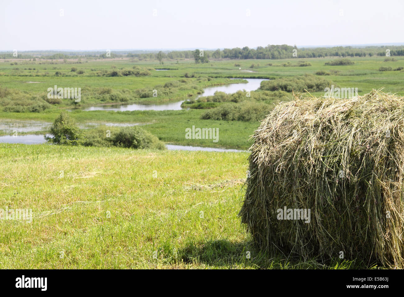Polish agricultural scene hayfield at edge of marshes - Stock Image