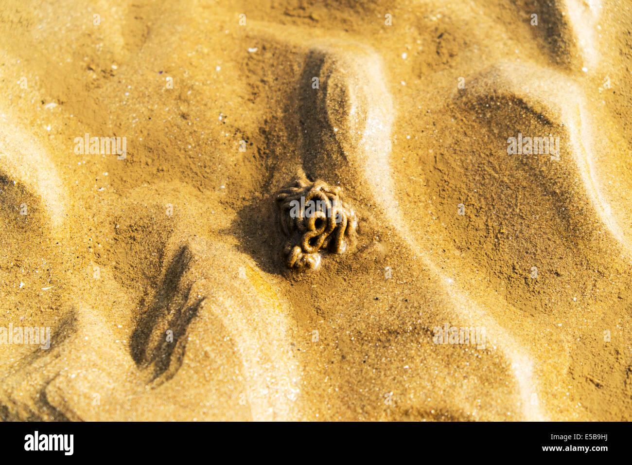 Lugworm Ragworm European Lugworm Arenicola marina cast of defaecated sediments on the beach at low tide - Stock Image