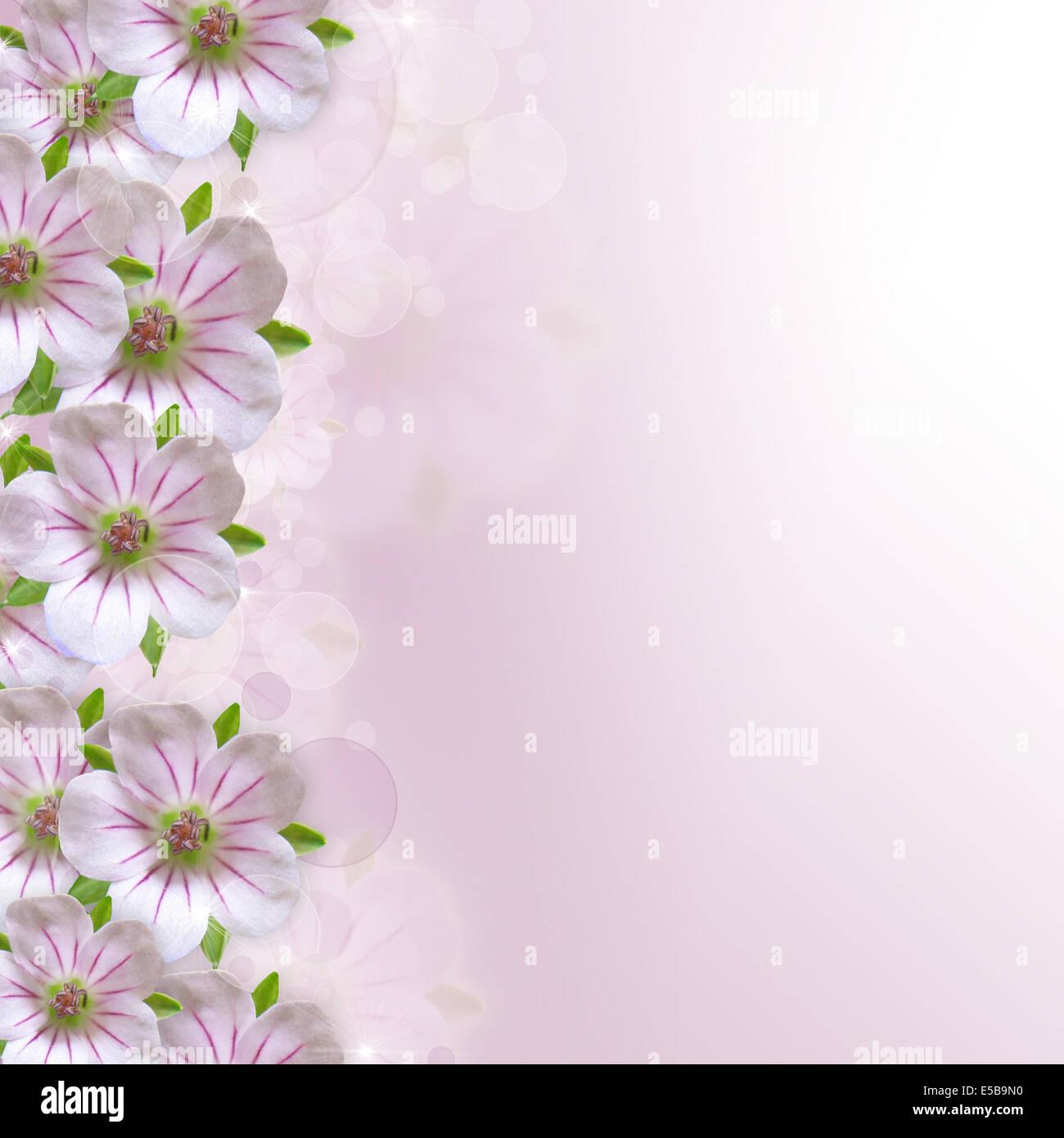 Border of white pink flower on purple white background stock border of white pink flower on purple white background mightylinksfo