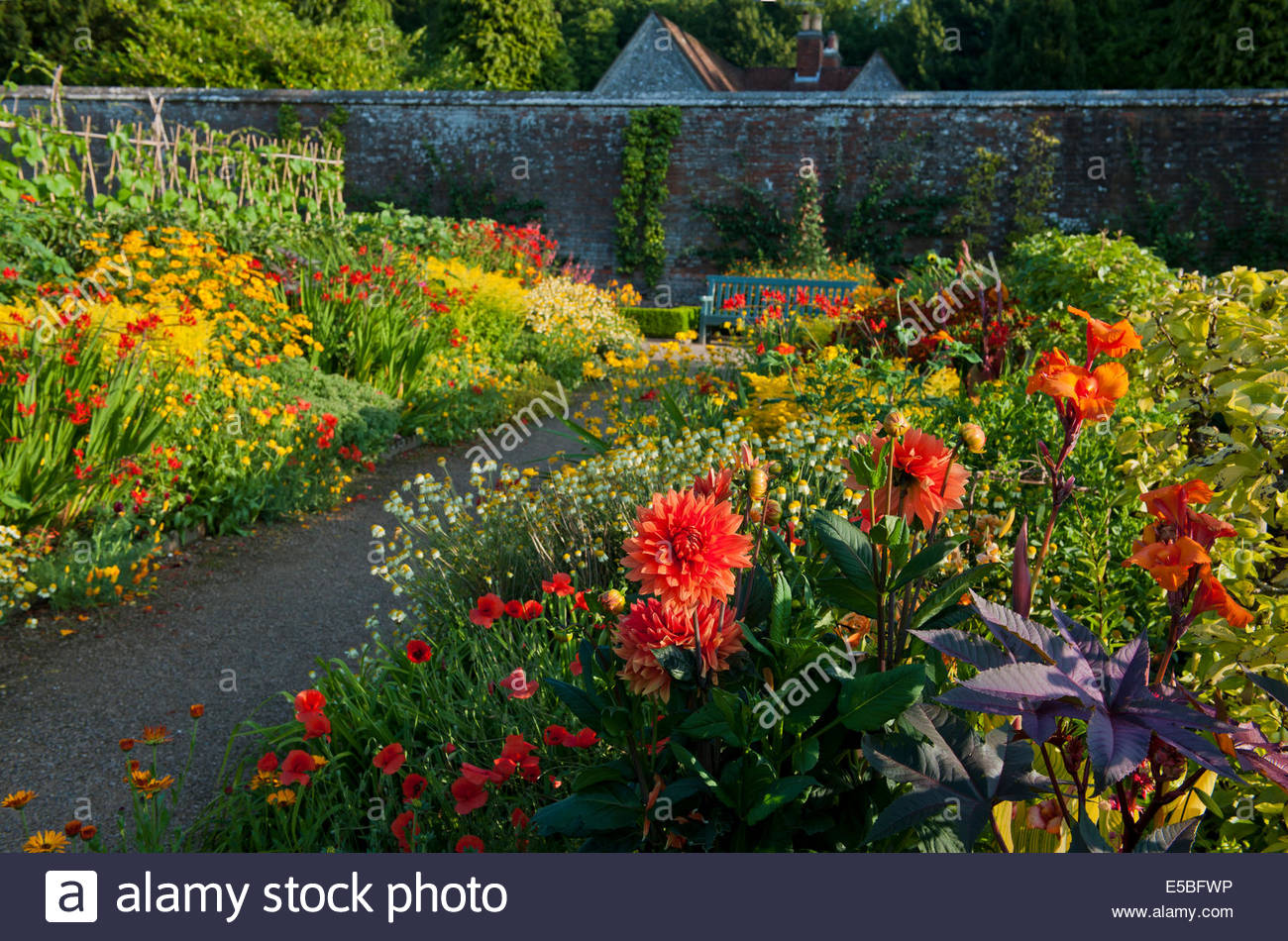 hot warm colour color borders view mixed summer border West Dean Sussex England walled garden July path formal focal - Stock Image