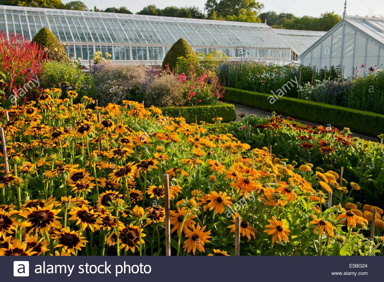 Cut Flowers Rows Growing West Dean Walled Garden Sussex England