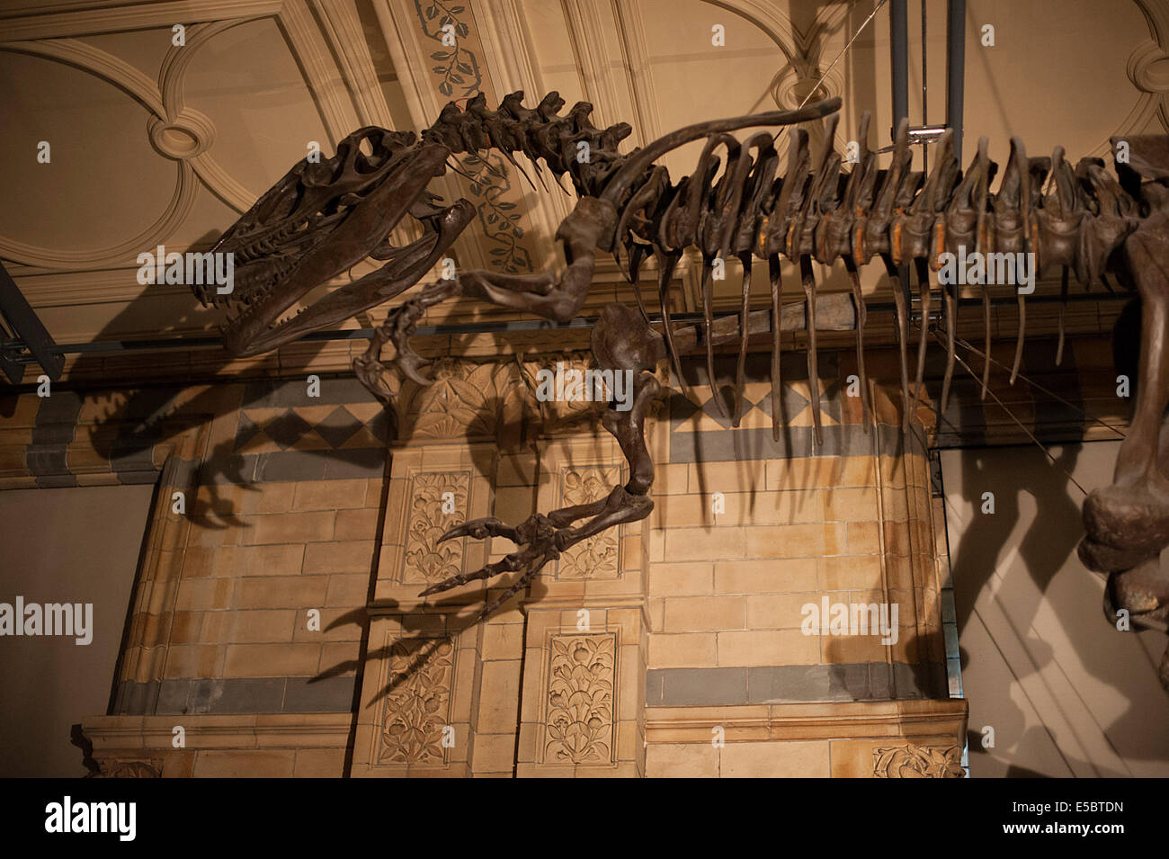 Dinosaur Bernissart Iguanodos  Iguanodon bernissartensîs, Jurassic Period - Stock Image