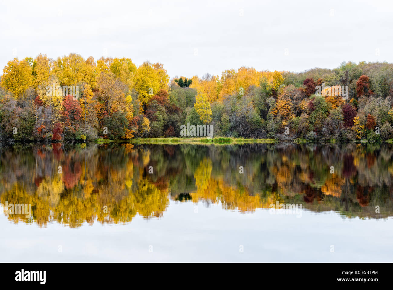 Reflection of autumn trees in river - Stock Image