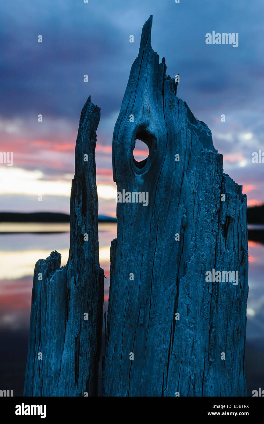 Drift wood in front of lake during sunset - Stock Image