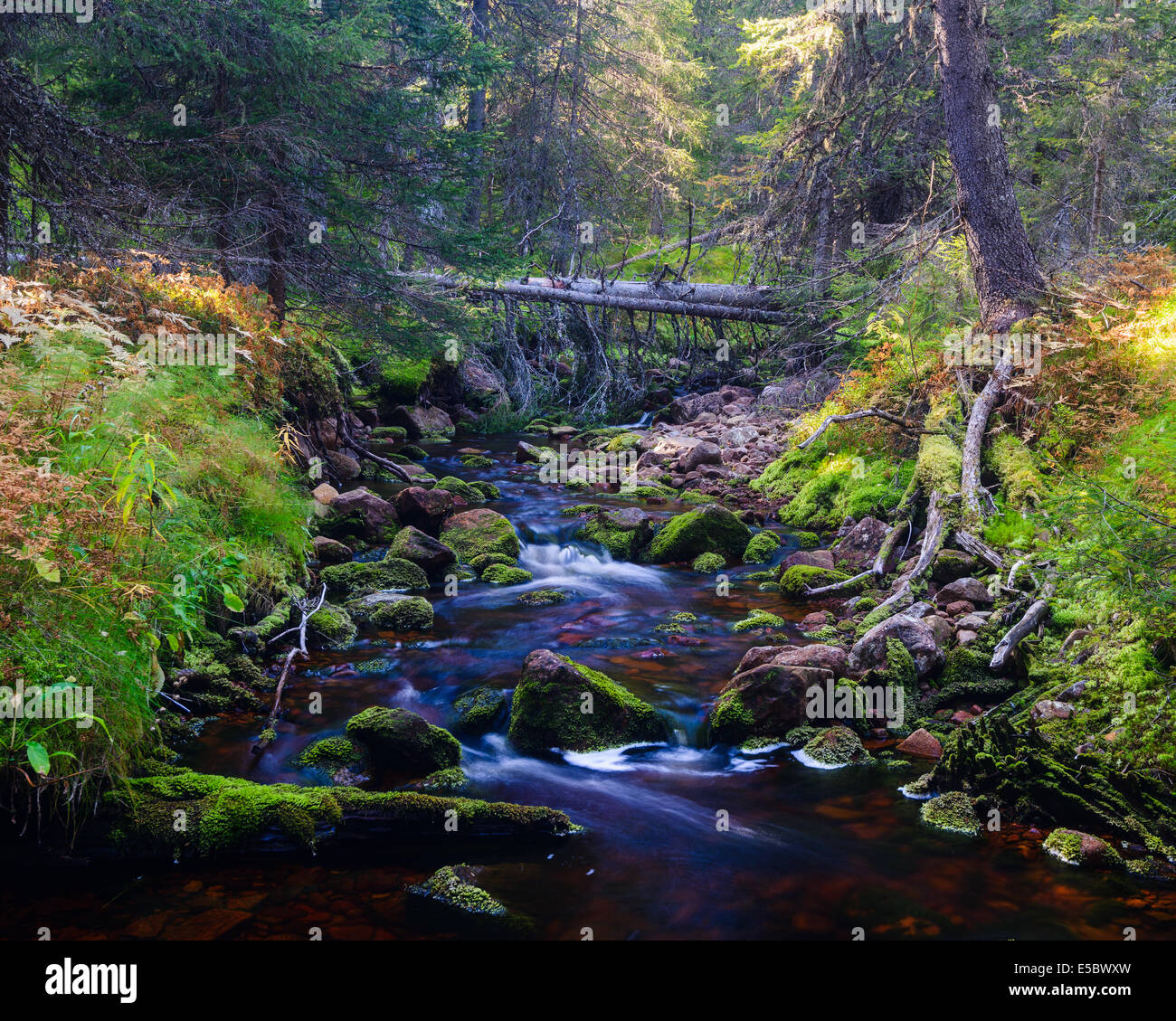 River flowing through forest, Dalarna, Sweden - Stock Image