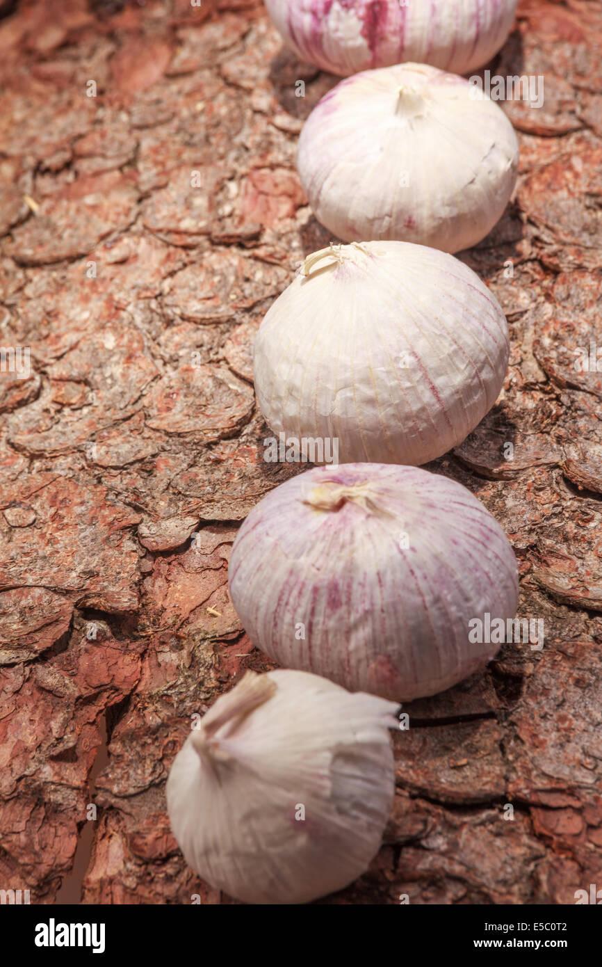 French garlic on tree bark Stock Photo