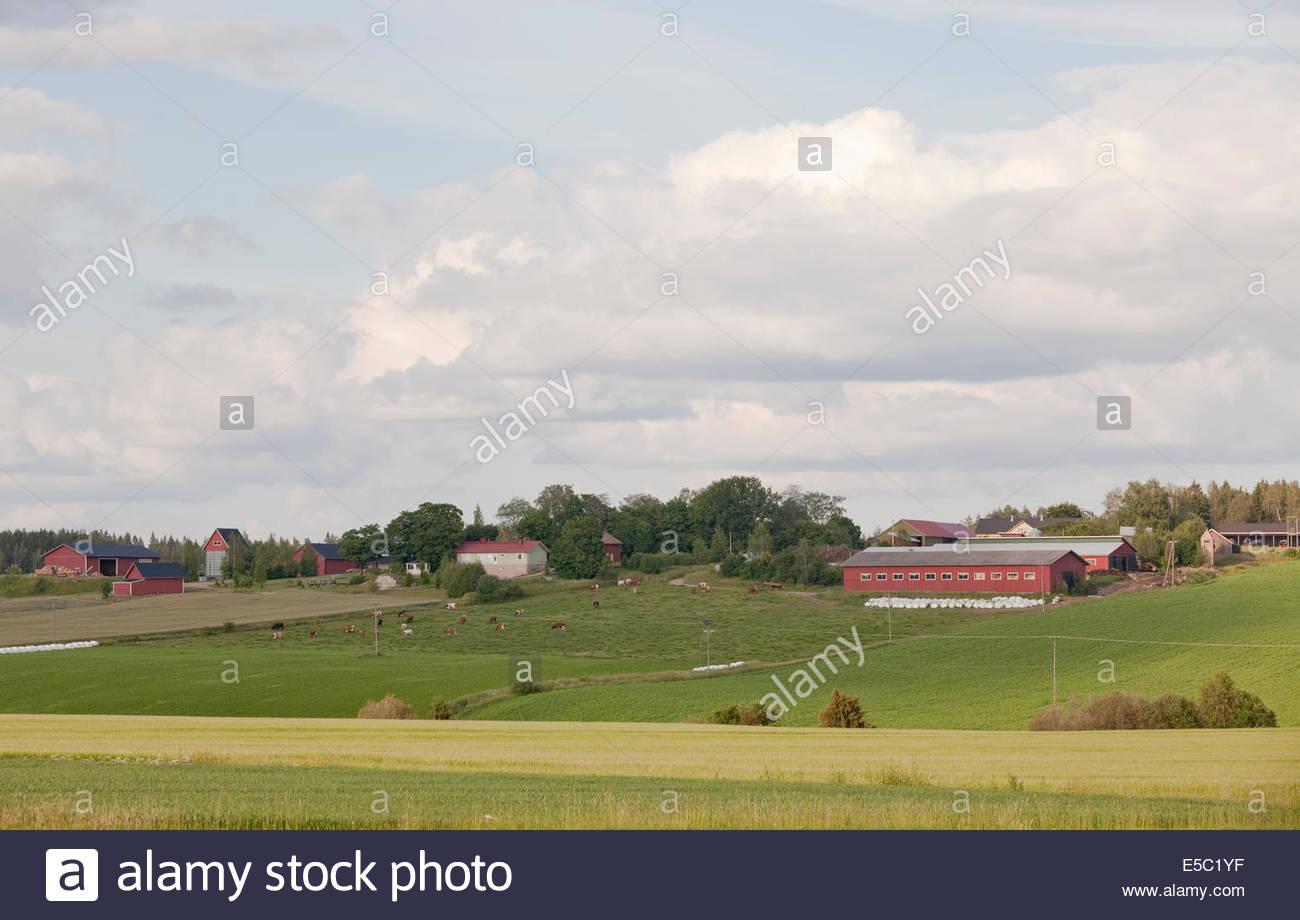 A farm in Finland - Stock Image
