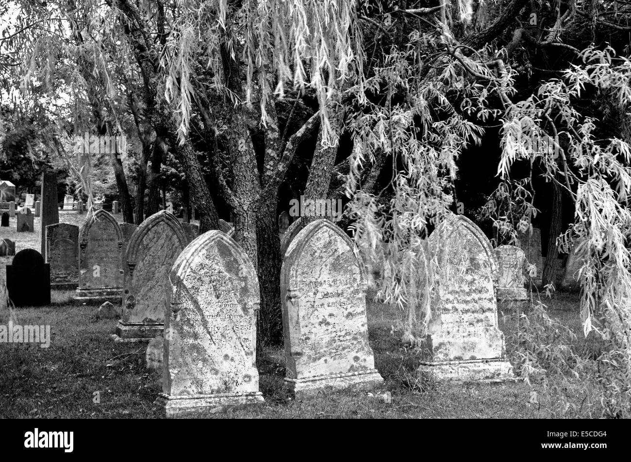 Old gravestones from the 1800s are found in this cemetery in Cape Cod, Massachusetts (MA), USA. B&W image. - Stock Image