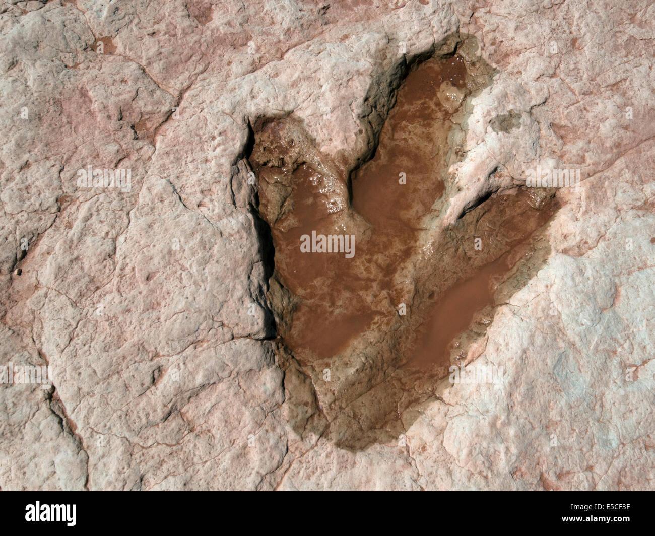 Dinosaur footprint, Moenkopi Dinosaur Tracks, Tuba, Arizona - Stock Image