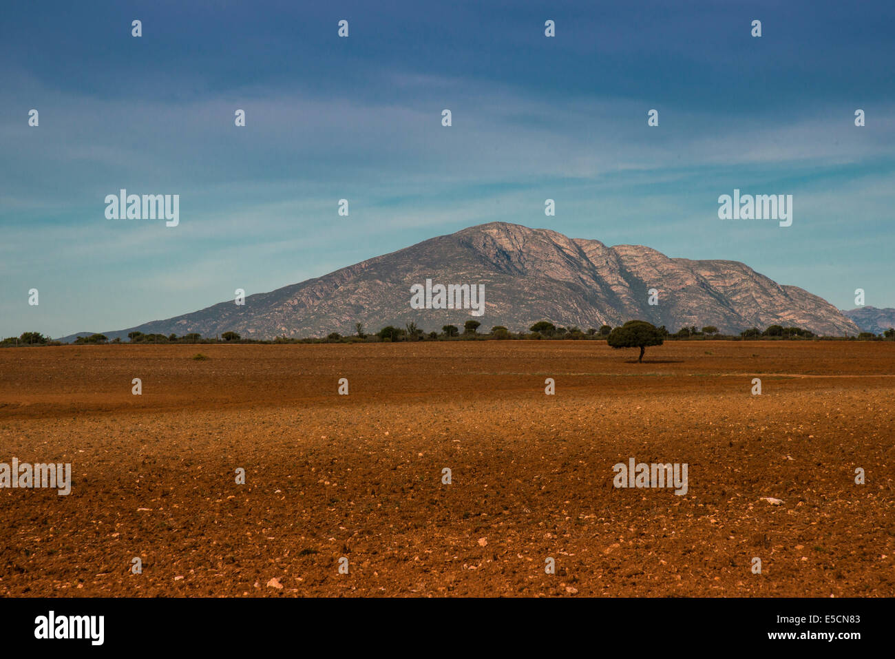 Little Karoo, semi-desert, Western Cape, South Africa - Stock Image