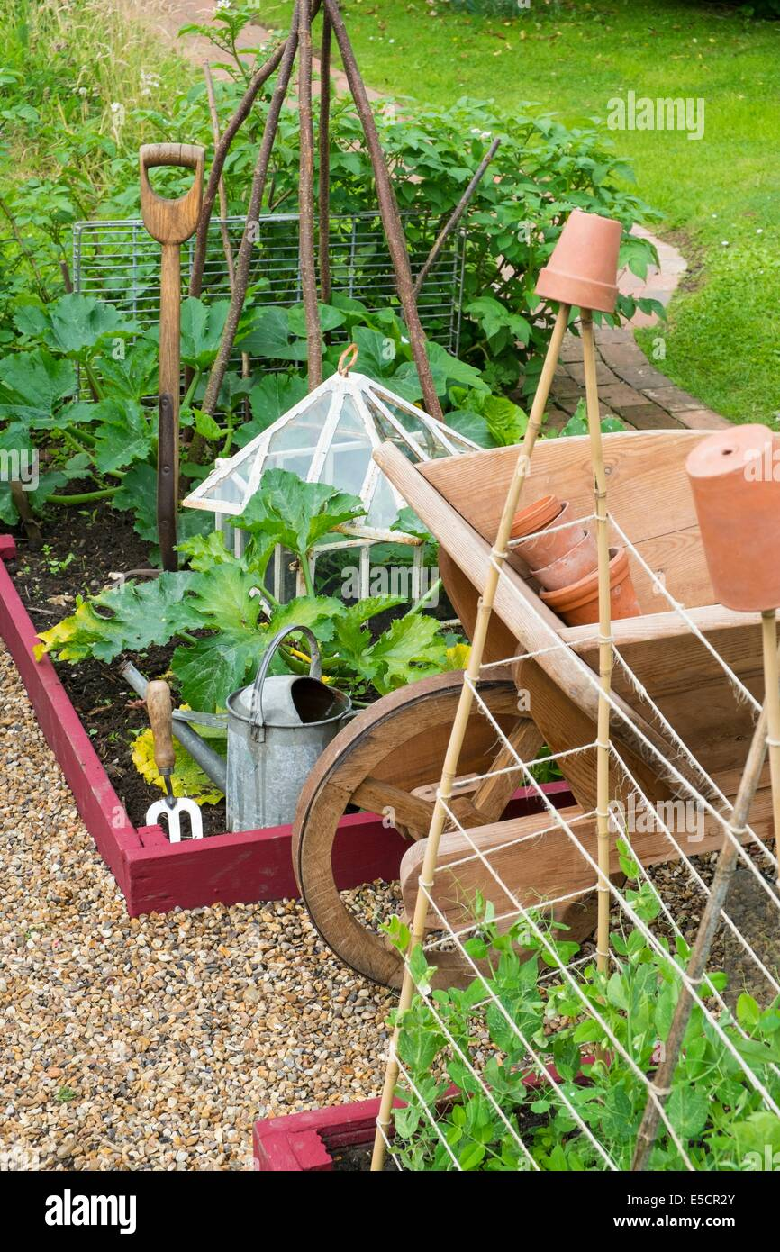 View of small raised bed with Garden Peas, 'Kelvedon Wonder', Supported By canes and garden twine, and outdoor - Stock Image