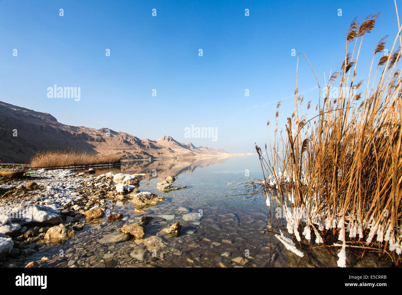 Israel, Dead Sea, salt crystalization caused by water evaporation - Stock Image