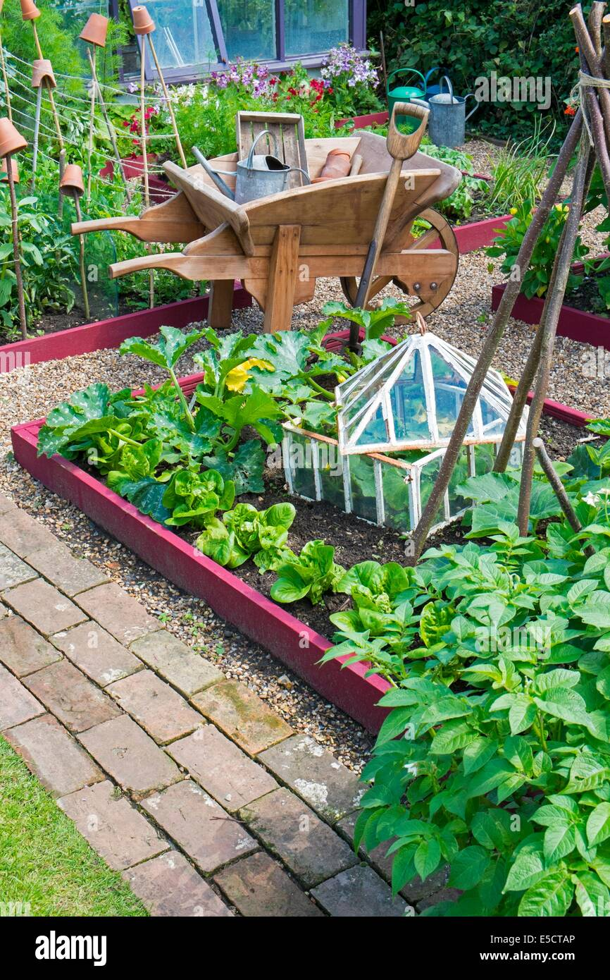 View of small raised bed crops including, courgettes, lettuce and outdoor cucumber in antique cloche, England July. - Stock Image