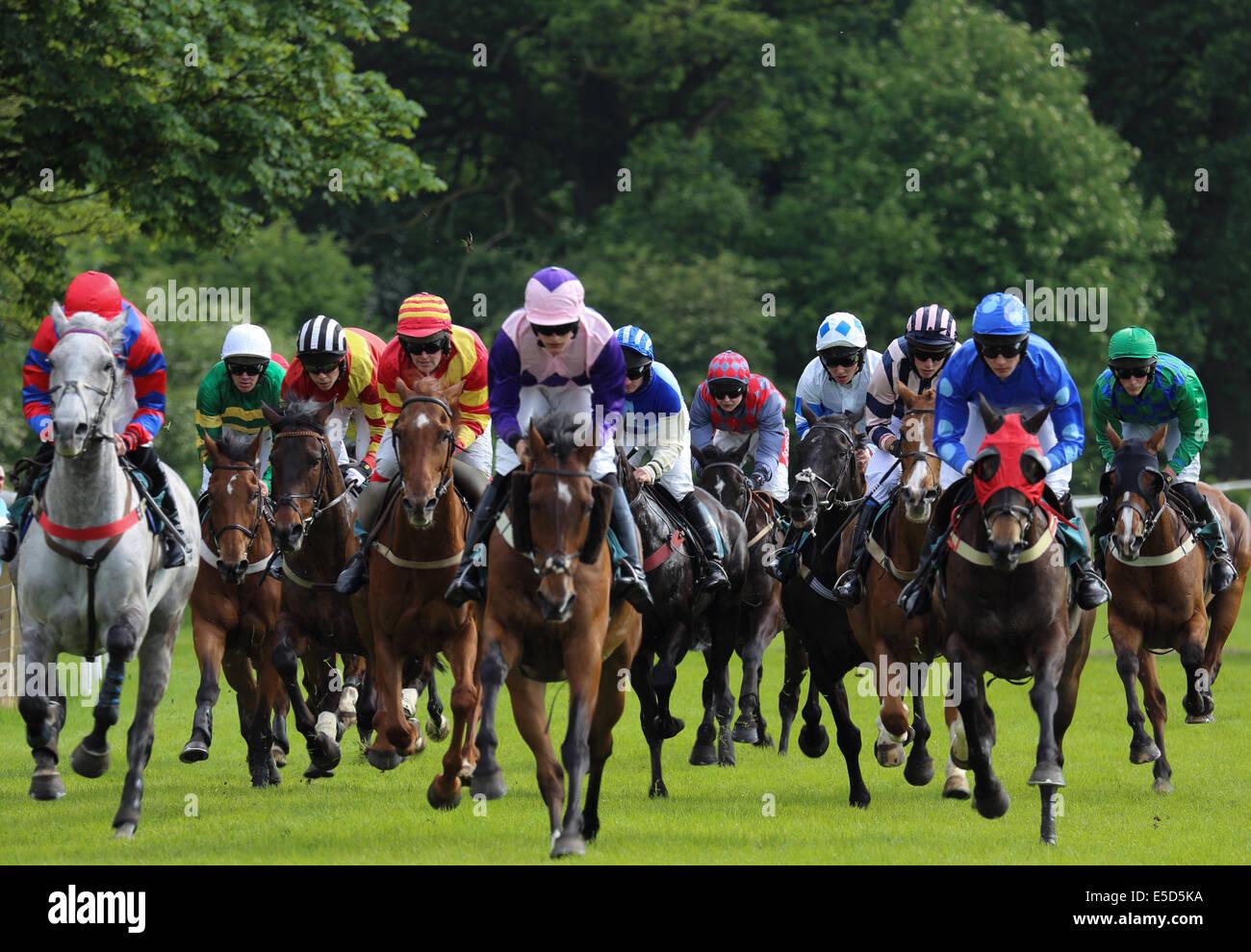 Race horses and jockeys at Cartmel races - Stock Image