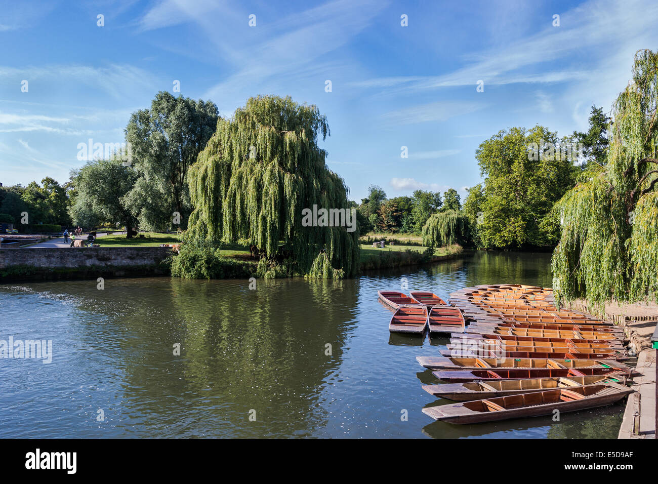 Punts moored on the River Cam, Cambridge, UK - Stock Image