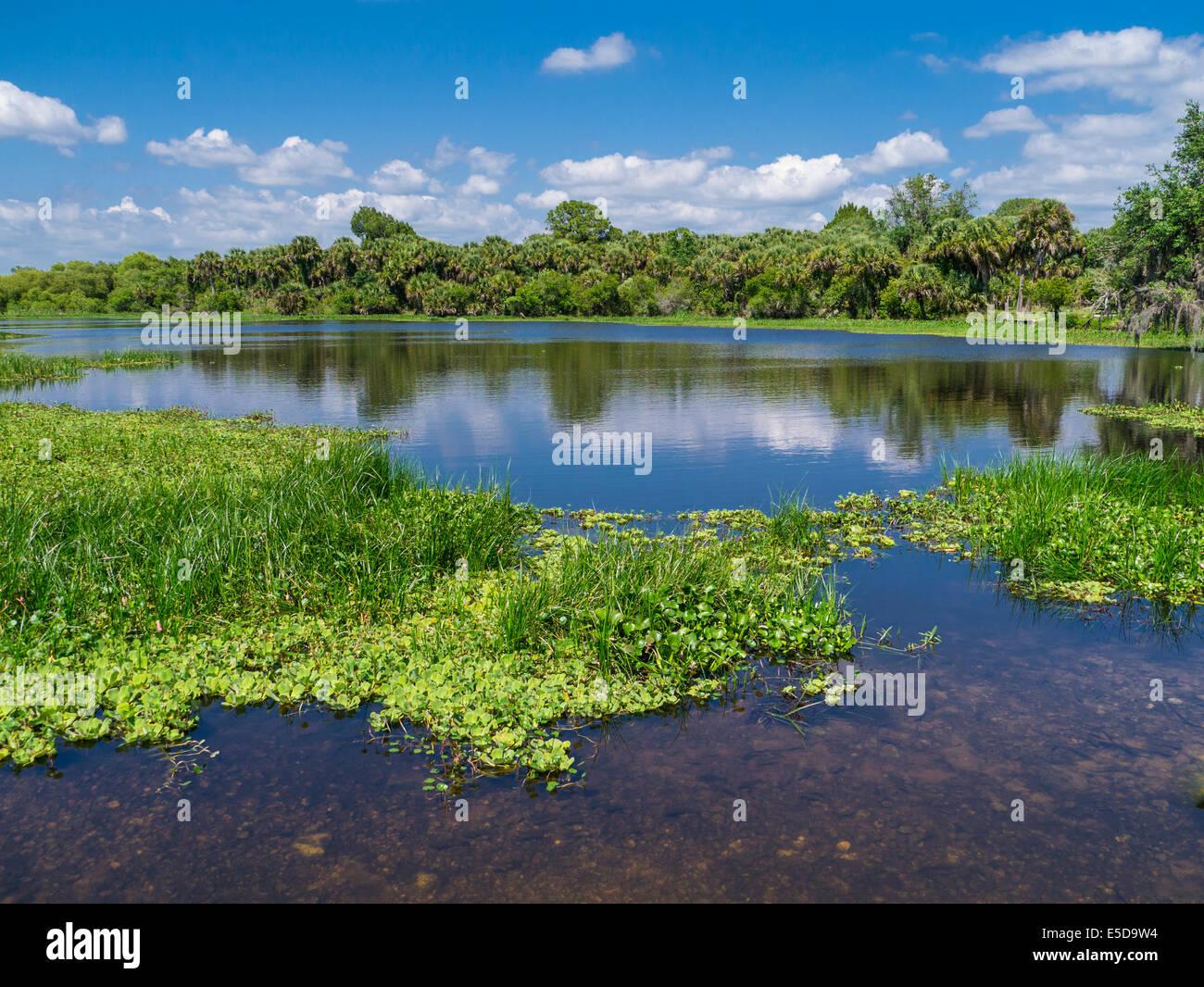 Deer Prarie Creek Preserve in Venice Florida Stock Photo