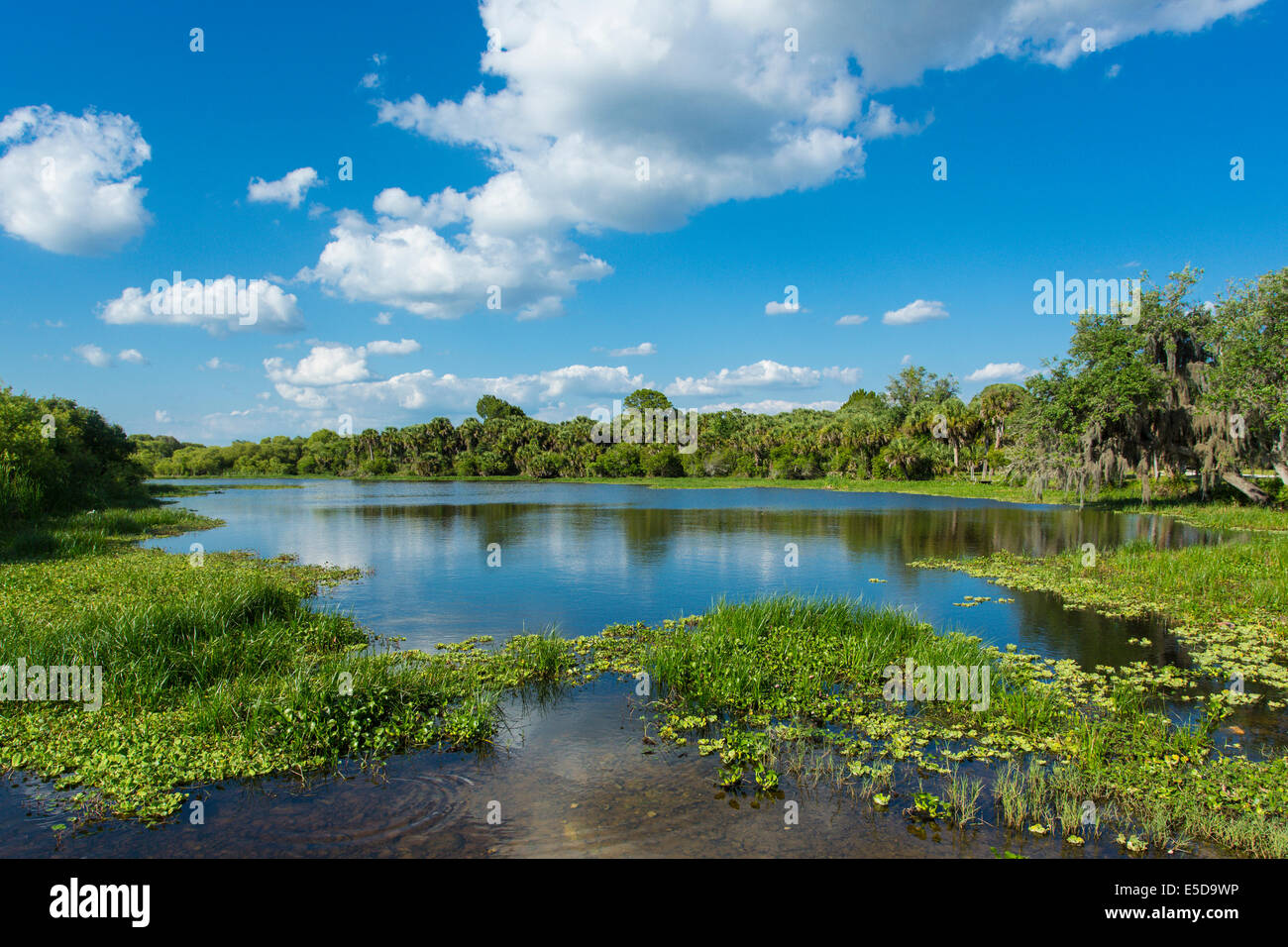 Deer Prarie Creek Preserve in Venice Florida Stock Photo