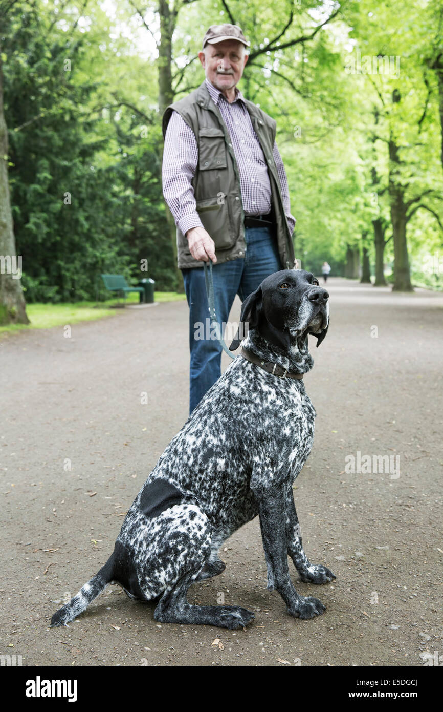 Senior man with his German Shorthaired Pointer in city park Stock ...