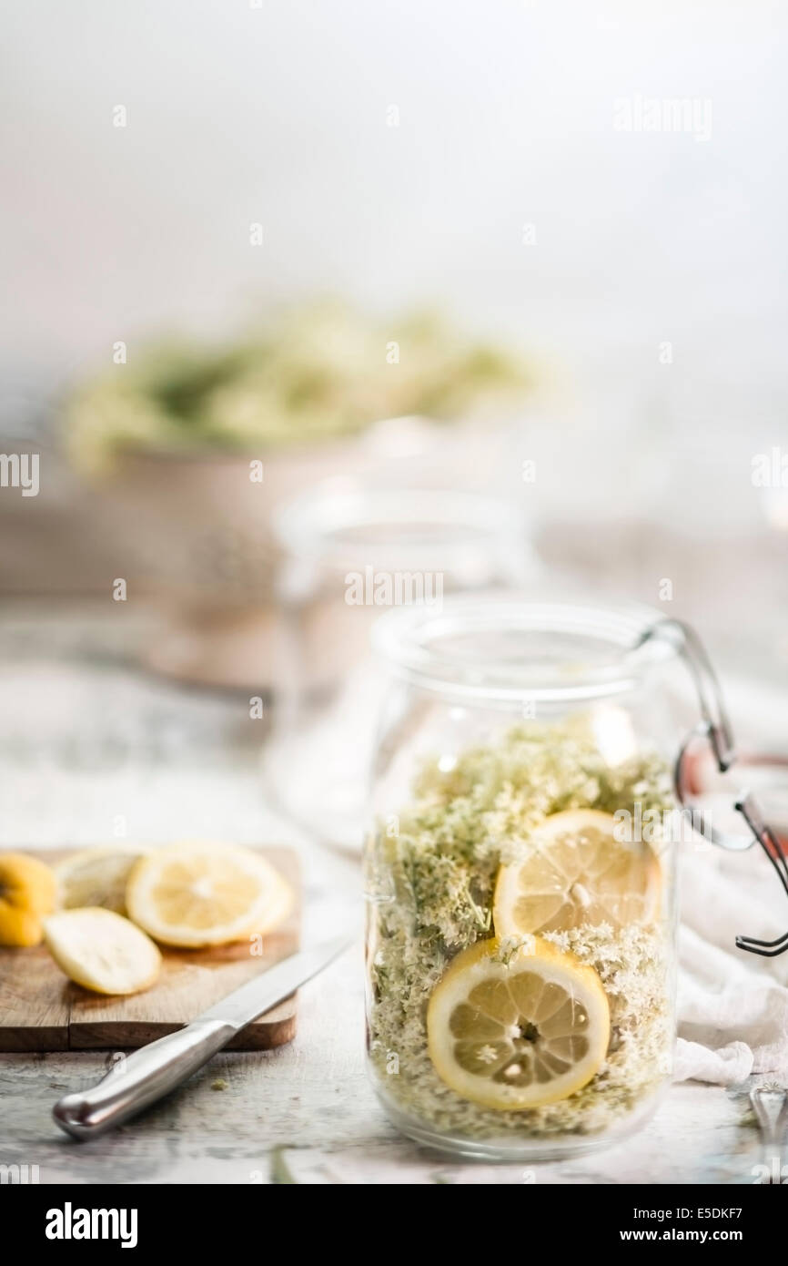 Preserving jar of elderflowers, Sambucus nigra, lemon slices and sugar for making elderflower cordial - Stock Image