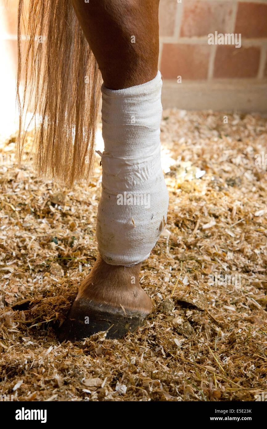 Verbunden Bein Pferd verletzt Verletzung verbundenes Pferdebein Schnitt Operation Operieren Arzt Tierarzt Tieraerzte - Stock Image
