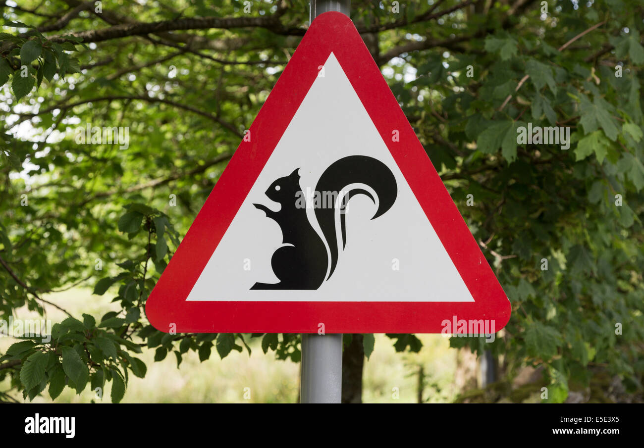 Sign warning of presence of red squirrels in the Lake District National Park, Cumbria, UK - Stock Image