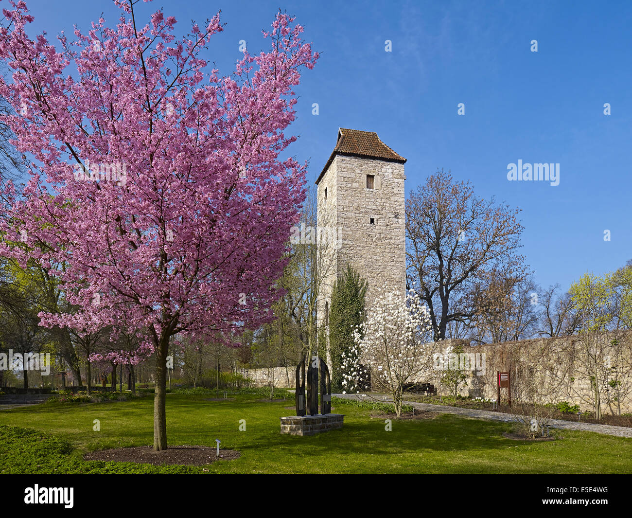 Arboretum with north tower of the town wall  in Bad Langensalza, Germany Stock Photo