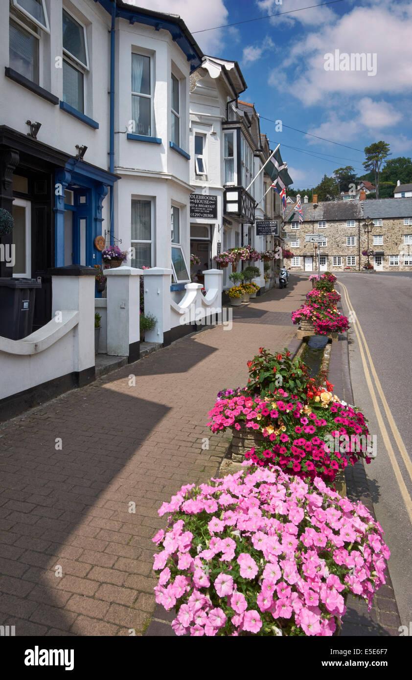Roadside flowers on Fore Street, Beer, South Devon, UK. - Stock Image