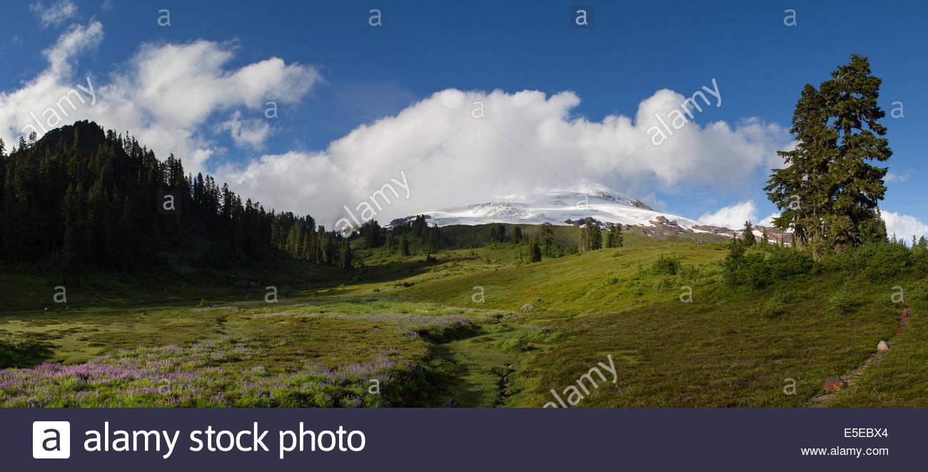 A meadow of wildflowers is seen below Mount Baker in Washington's Cascade Mountain Range. - Stock Image