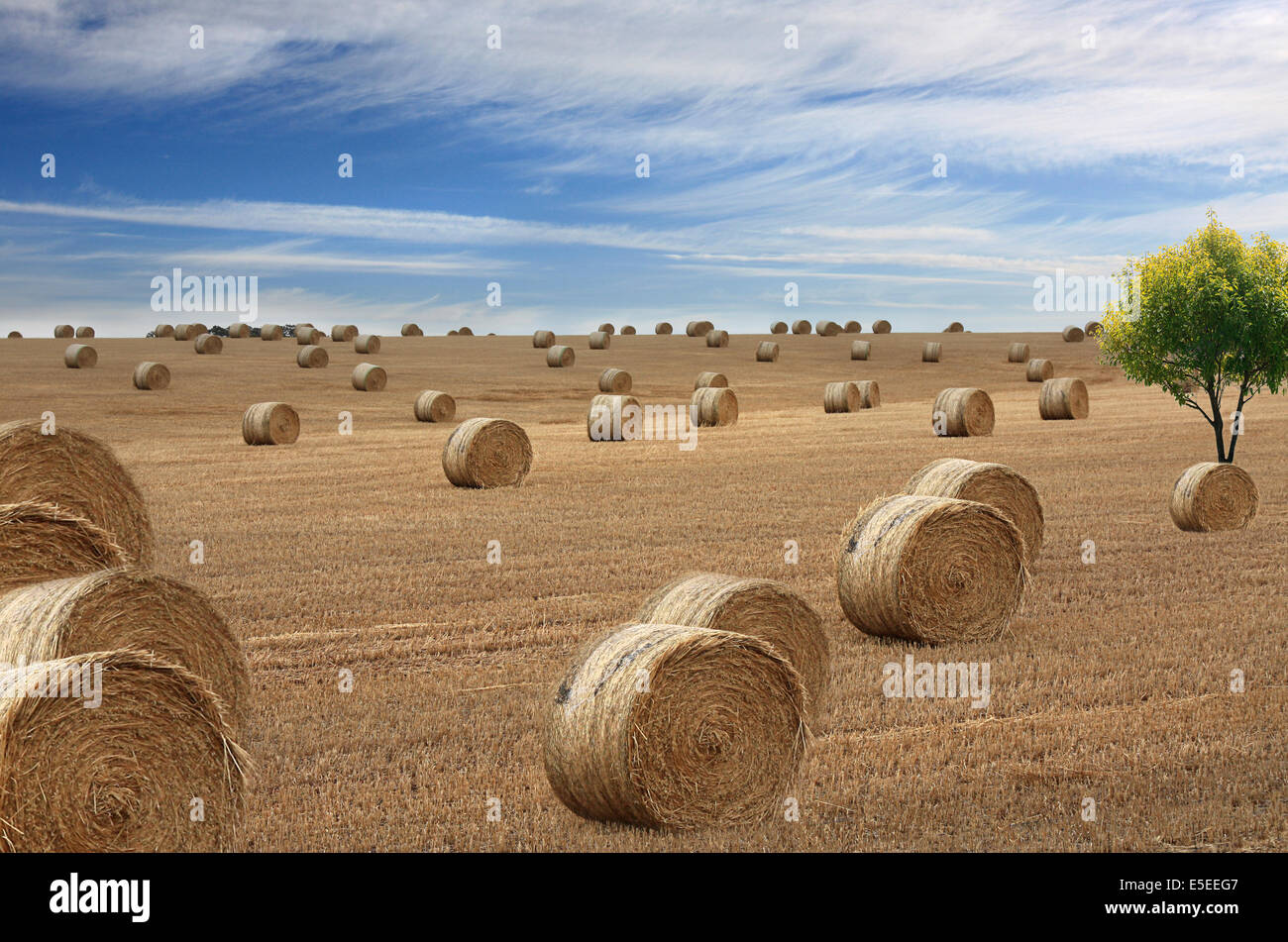 inland Australia a view of freshly rolled hay bales - Stock Image