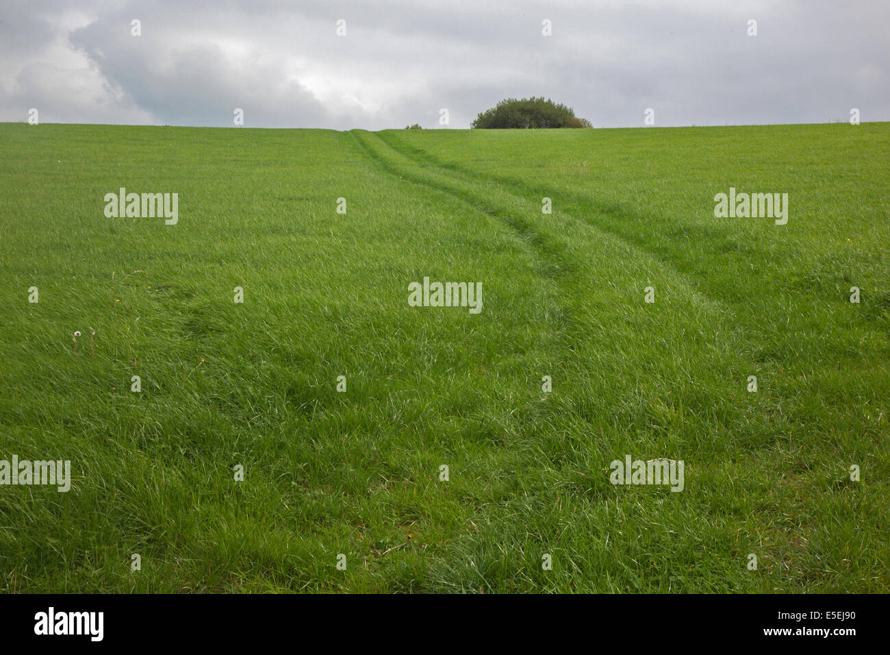 Track in a field leads to the horizon - Stock Image