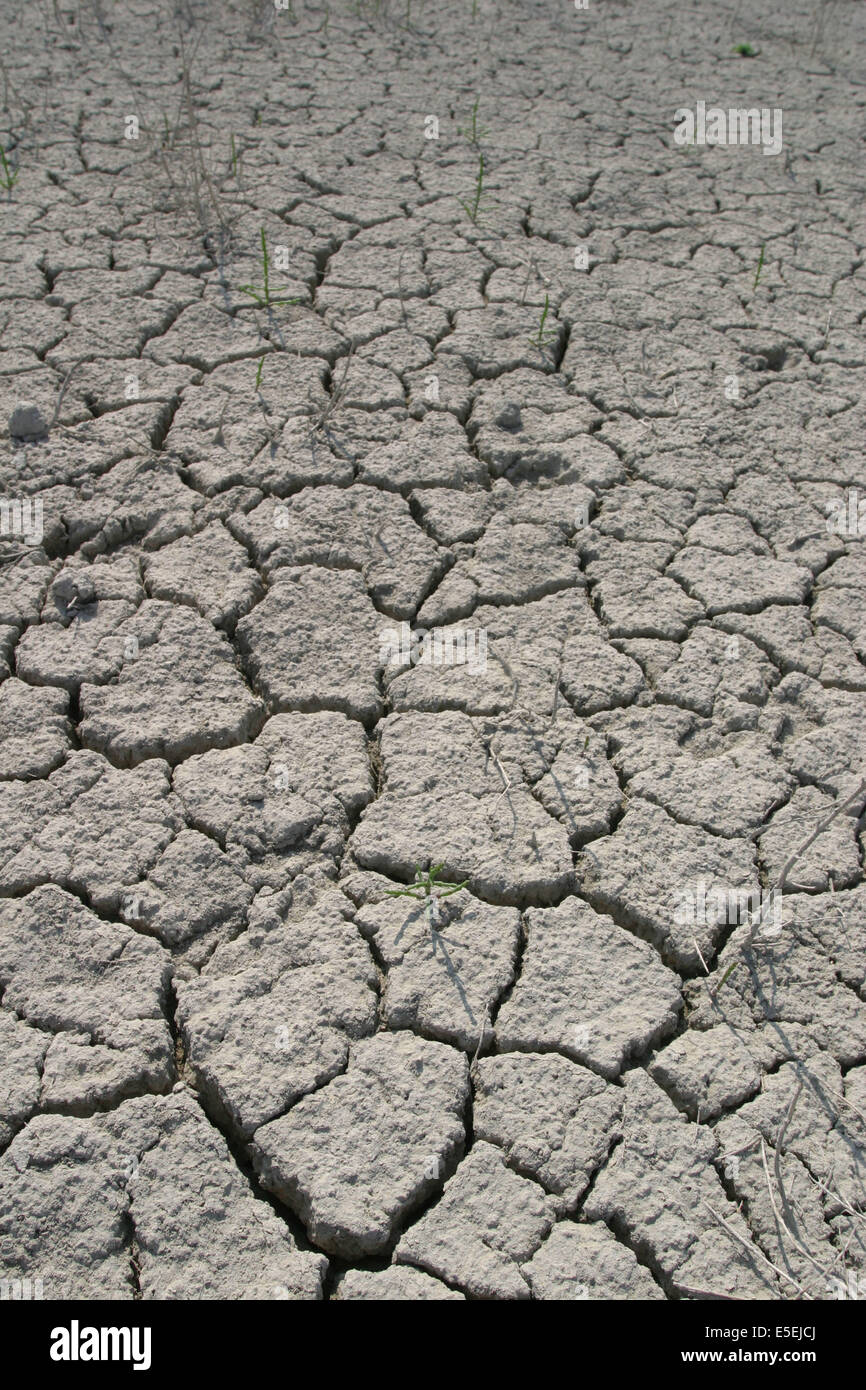 France, Basse Normandie, manche, baie du Mont-Saint-Michel, sol craquele, secheresse, maree basse, canicule, - Stock Image