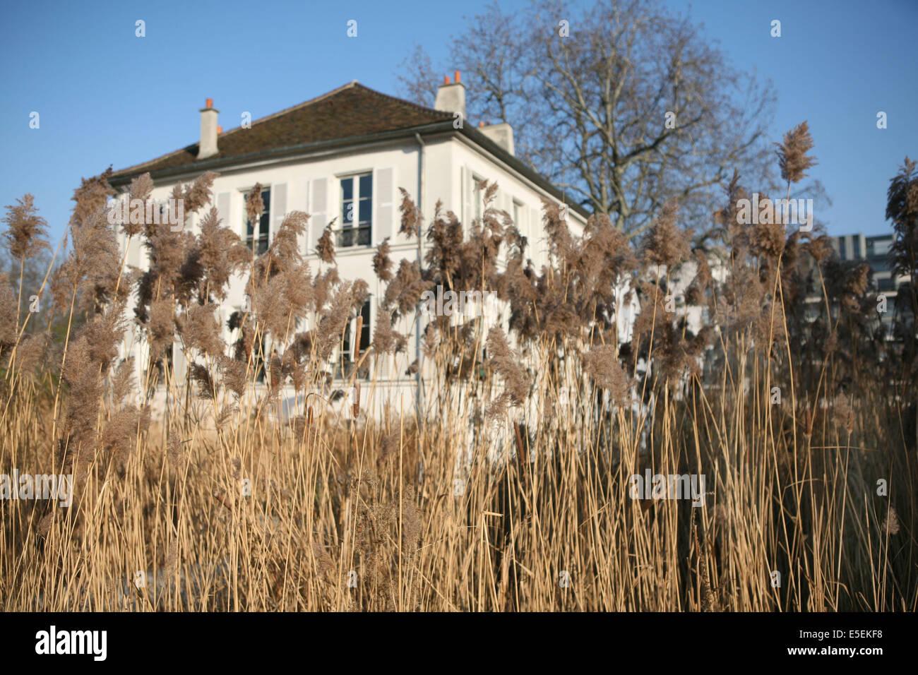 France, paris 12e, parc de Bercy, pavillon, roseaux, - Stock Image