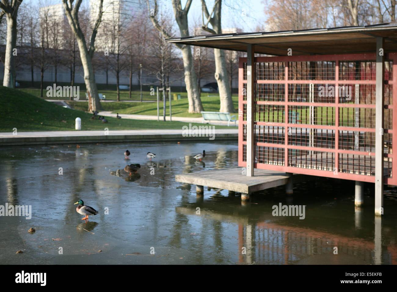 France, paris 12e, parc de Bercy, pavillon, plan d'eau gele, hiver, canards, - Stock Image