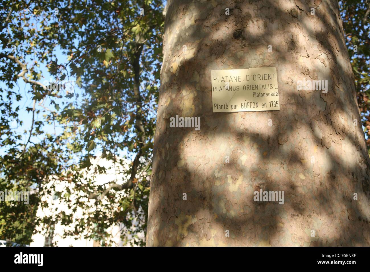 france, paris 5e, jardin des plantes, platane plante par buffon