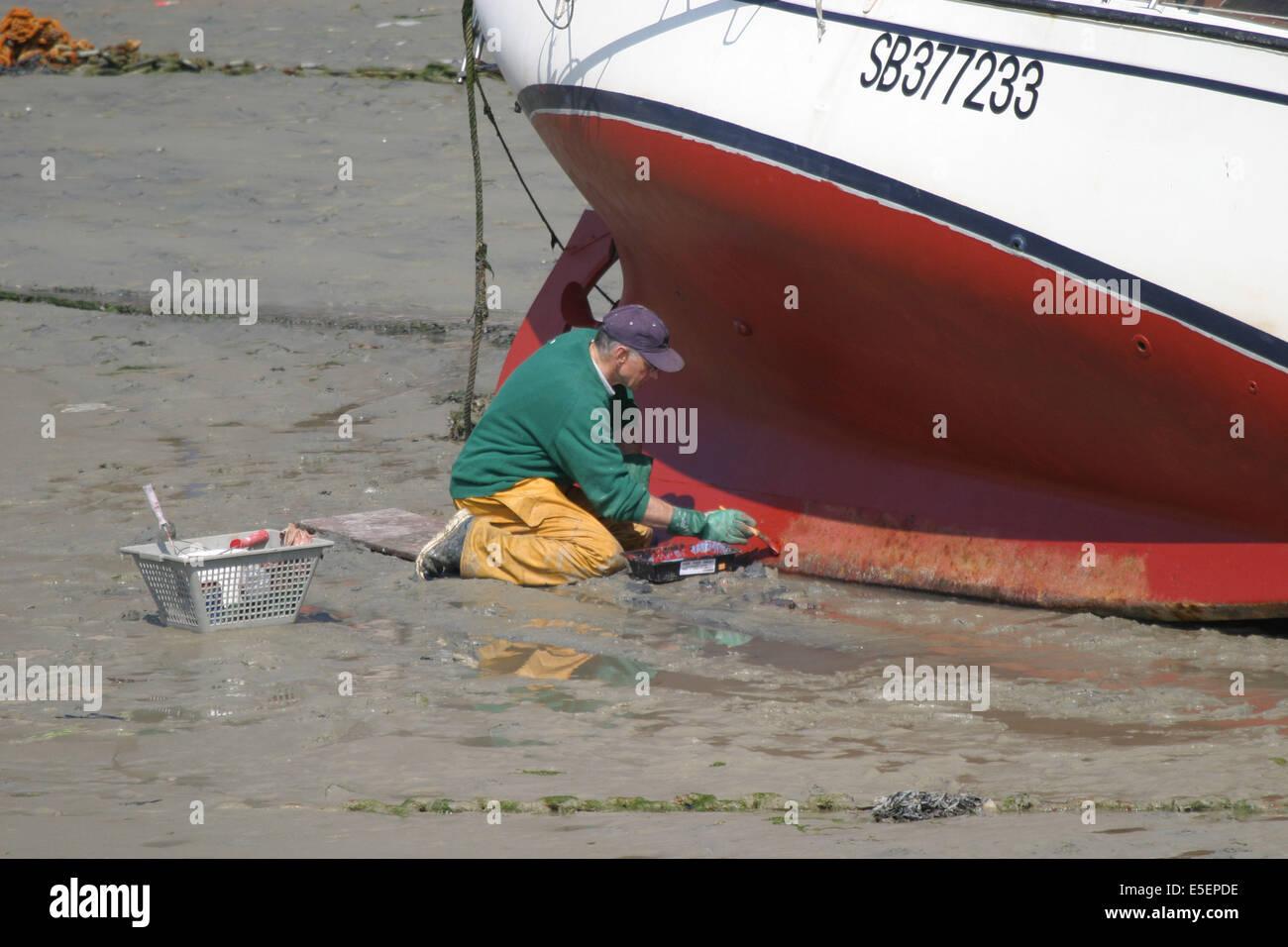 Chou stock photos chou stock images alamy - Port de peche cote d armor ...