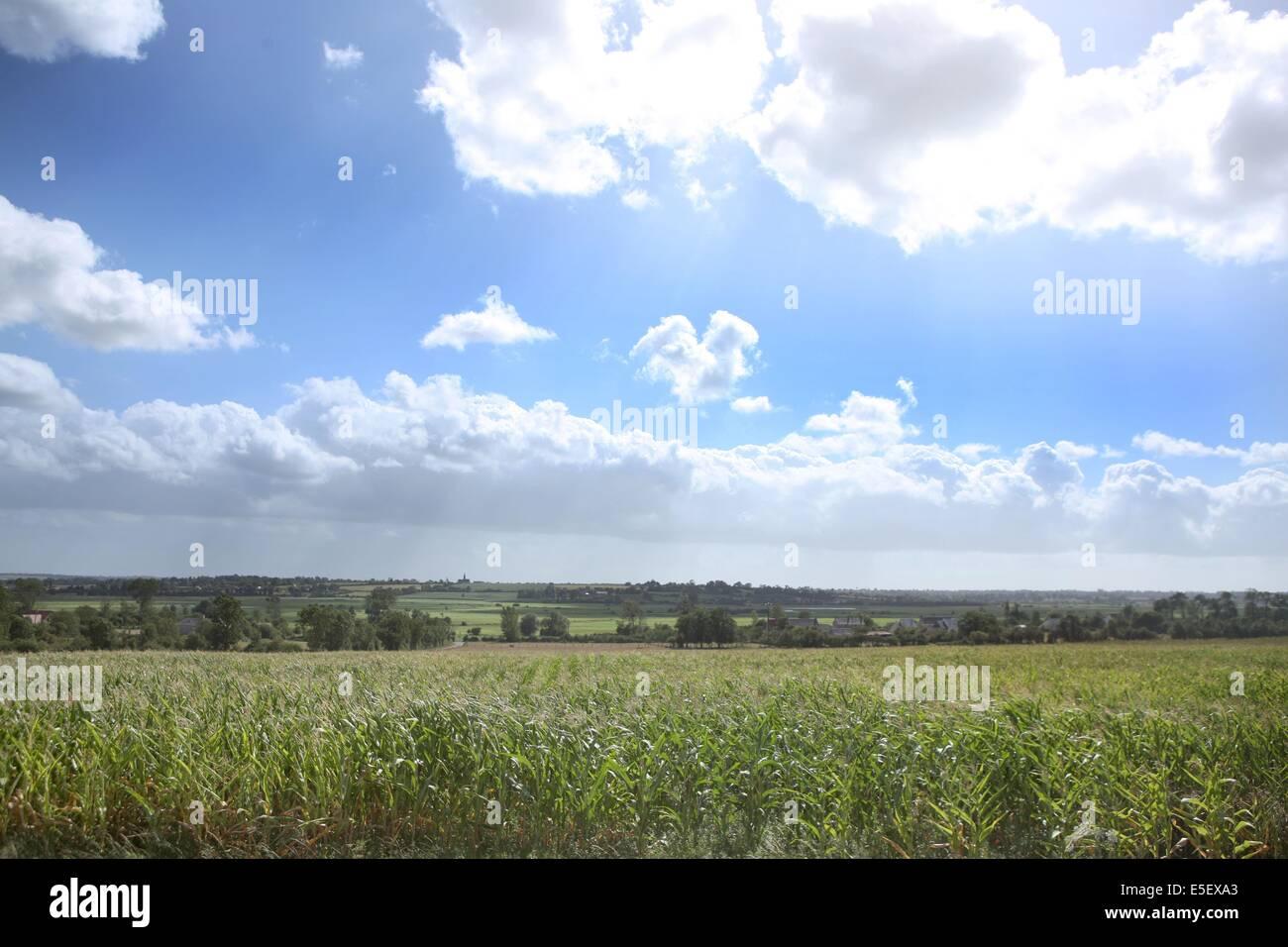 France, Basse Normandie, calvados, bessin, parc des marais du bessin et du cotentin, marais, environs d'isigny, - Stock Image