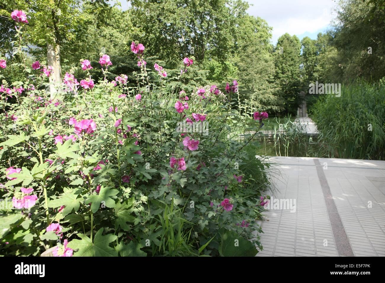 France, ile de france, paris, 12e arrondissement, bercy, parc de bercy, plan d'eau et oiseaux, roseaux  Date - Stock Image