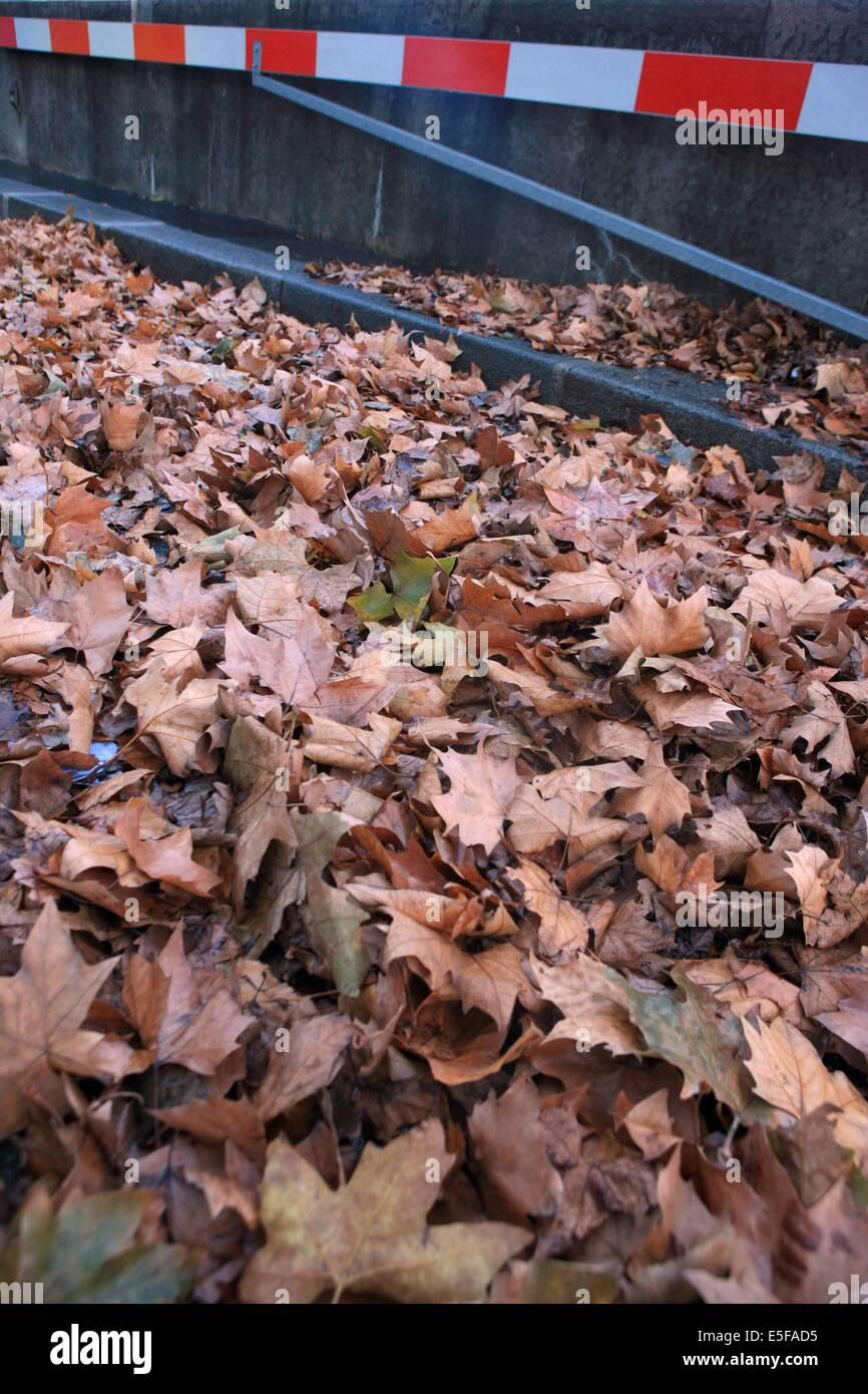 france, region ile de france, paris 7e arrondissement, quai d'orsay, feuilles mortes, automne, voie sur berge, Stock Photo
