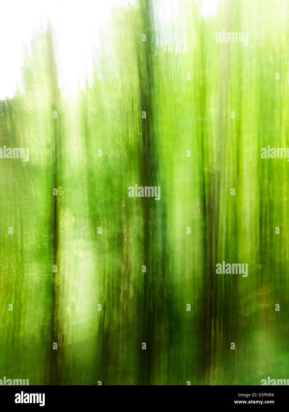 Green blurry - Stock Image