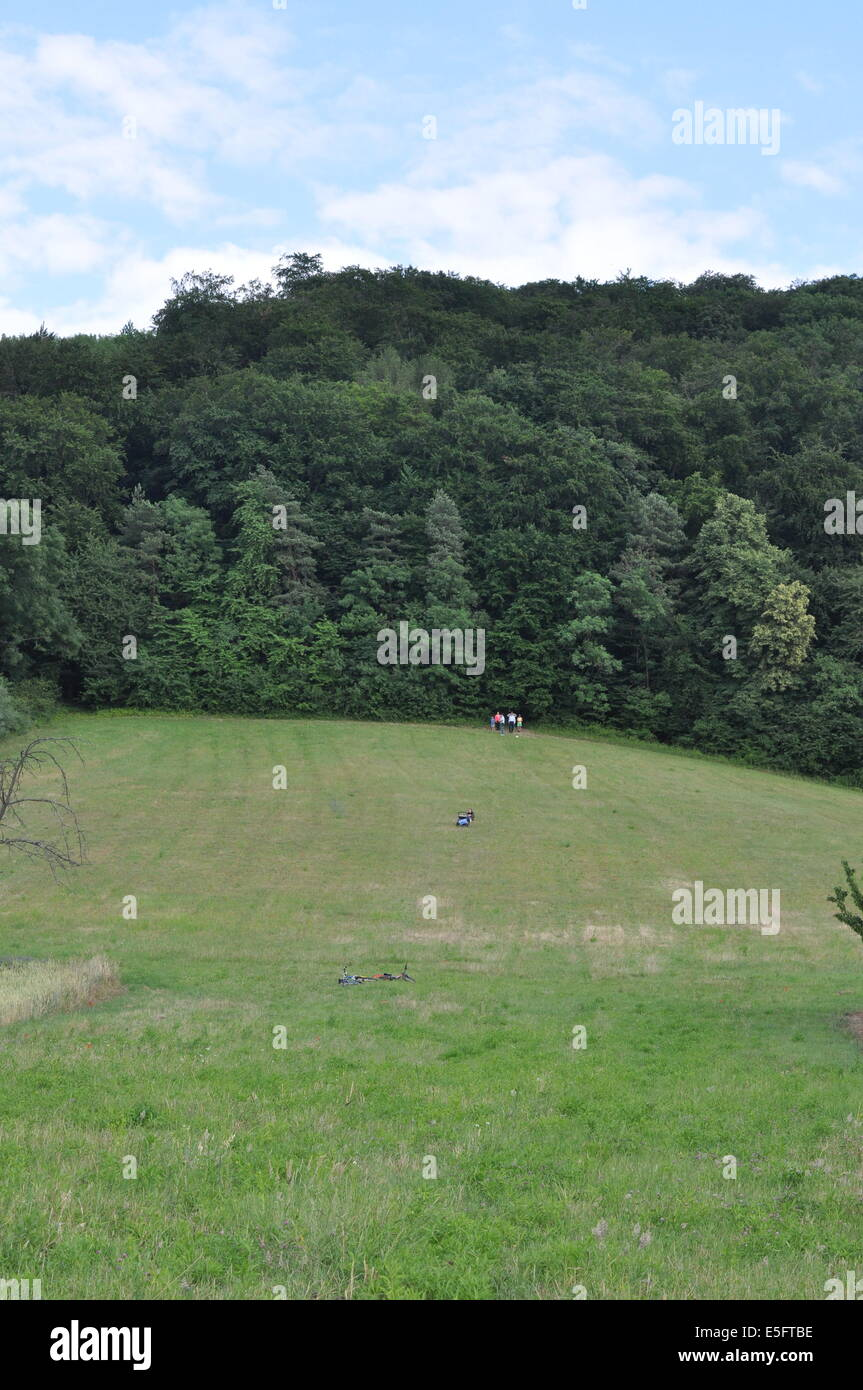 Walk along the edge of a wood - Spaziergang am Waldrand - Stock Image