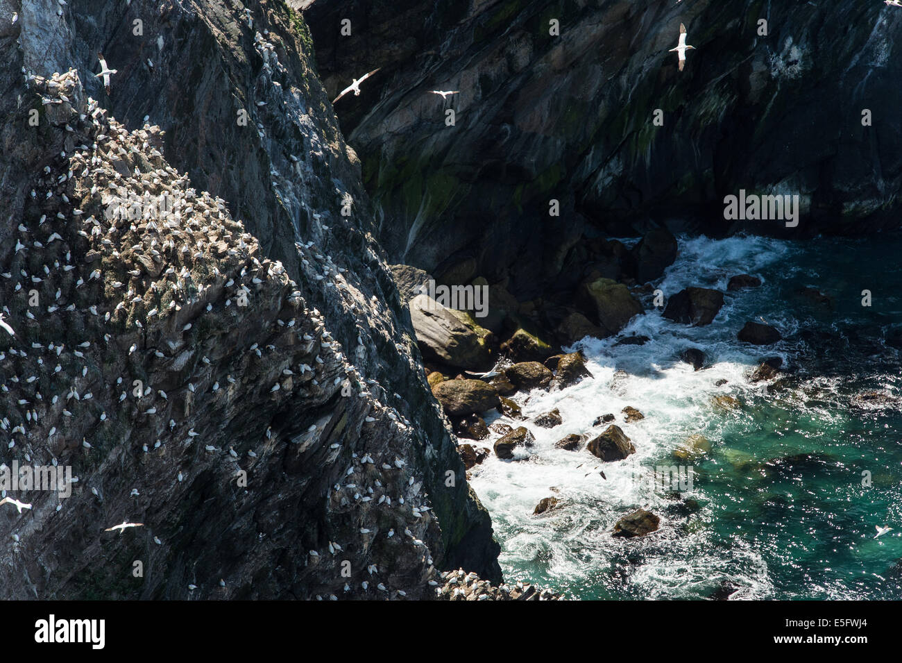 Scenery looking down from top of rocks at Hermaness, Unst, Shetland Island. - Stock Image