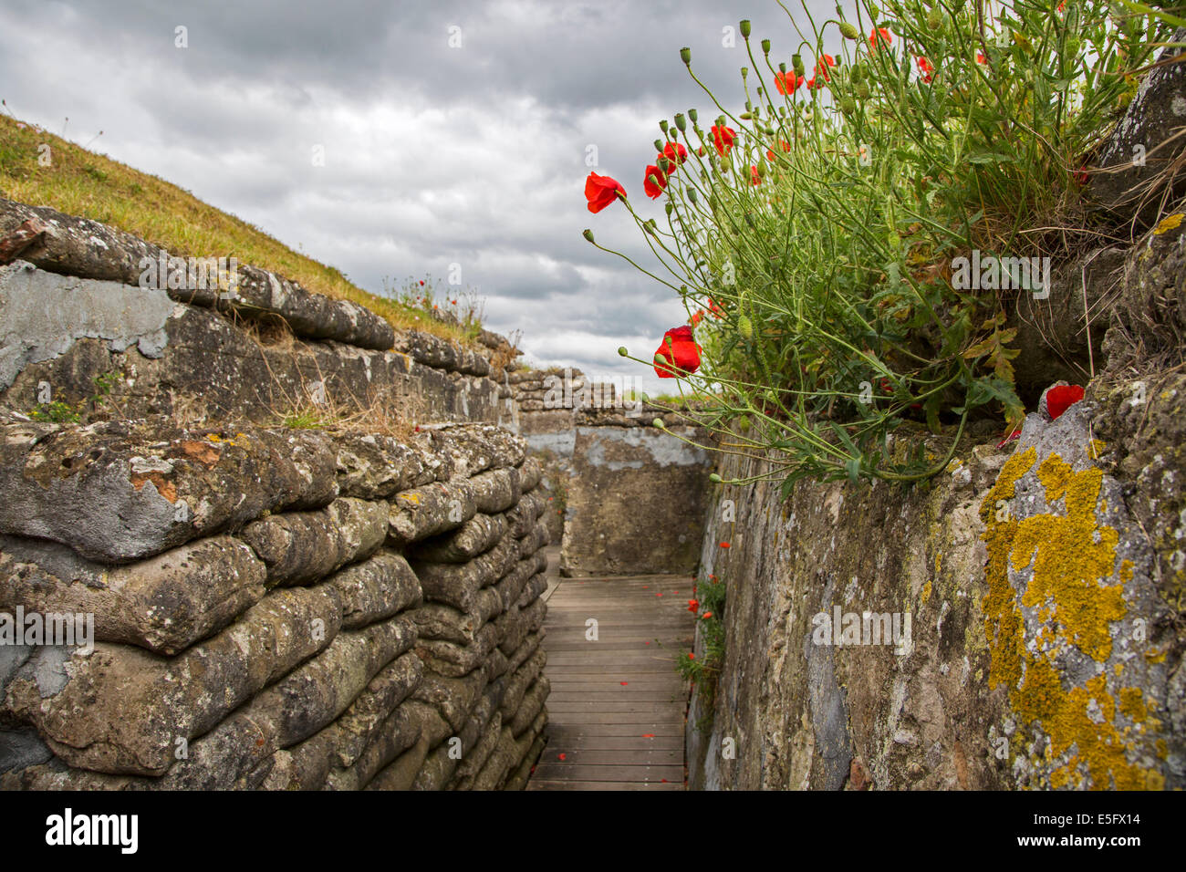 Poppies growing on sandbags at the Dodengang / Boyau de la Mort / Trench of Death, World War One trenches, Diksmuide, - Stock Image
