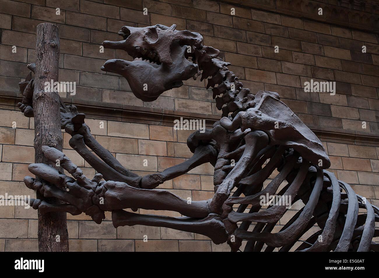 Giant ground sloth Megatherium americanum, mammal extinct - Stock Image
