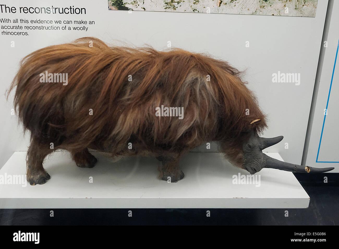 Recostruction of wolly rhinoceros Coelodonta antiquitatis, Pleistocene - Stock Image