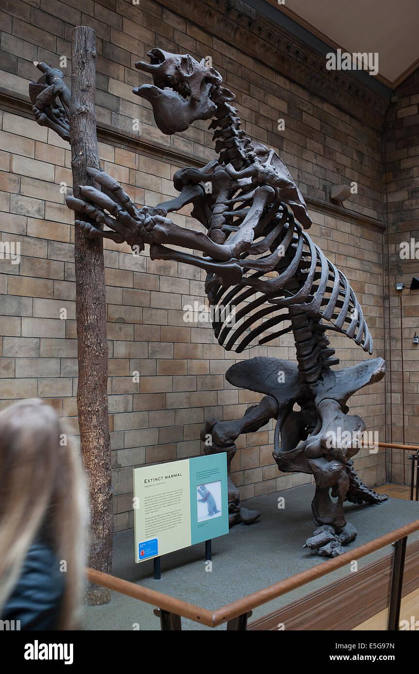 132be7efafc26 Skeleton of extinct mammal giant ground sloth Megatherium americanum -  Stock Image
