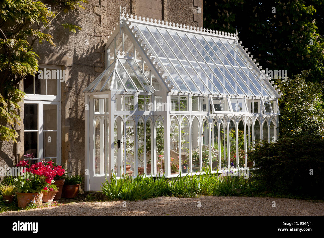 Traditional wooden greenhouse attached to side of house, English garden, England - Stock Image