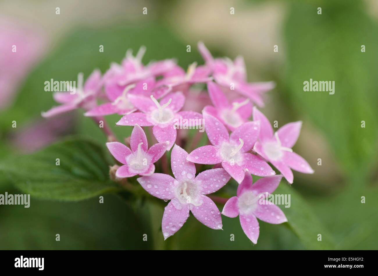 India Small Flowers Stock Photos India Small Flowers Stock Images