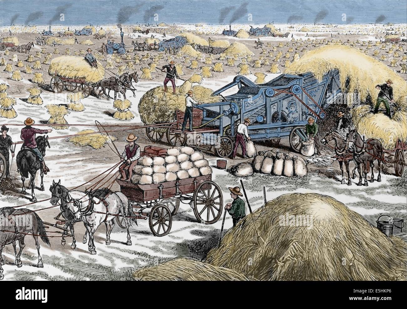 USA. Dakota. Steam-snorting engines power threshing machines harvesting the wheat crop in Dakota territory during Stock Photo